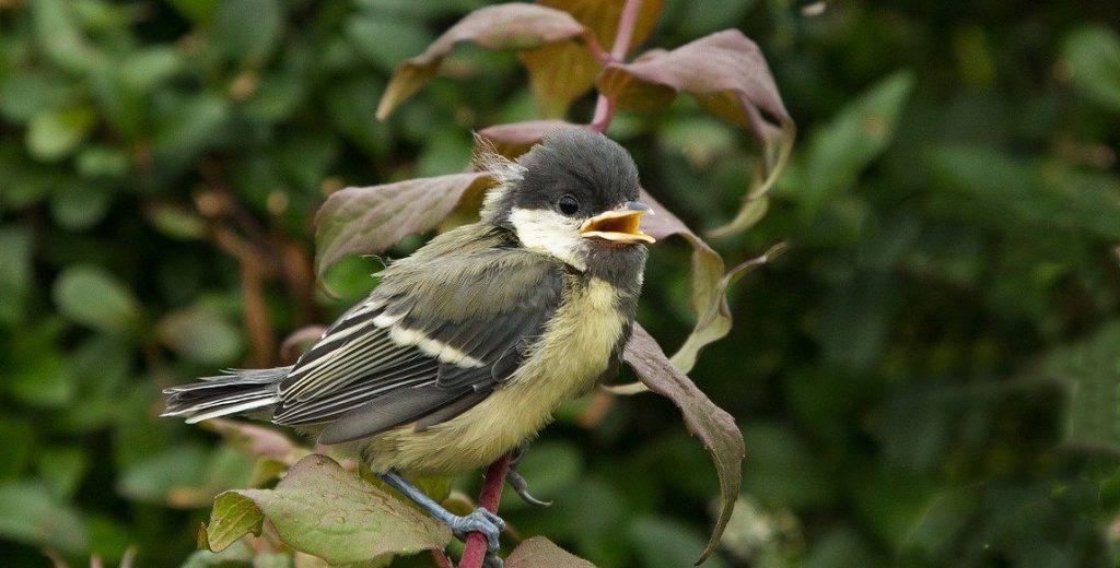 Птичките са малки помощници в градината
