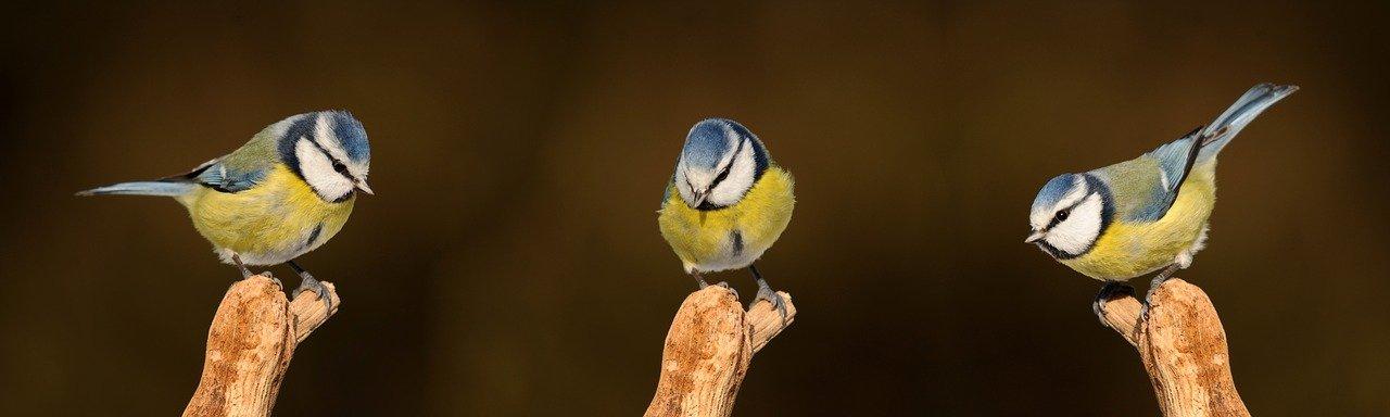 Птичките - помощници в градината